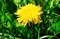 DSC_0065_818 (Derek Shore) Tags: flower beautiful grass wow cool nikon zoom nikond3300 d3300