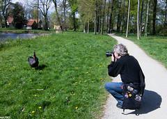 Fotograf (wpt1967) Tags: park swan fotograf photographer schwan blackswan schwarzerschwan schlosrheda wpt1967