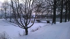 Bookcrossing release (zimort) Tags: winter norway river book norge vinter bookcrossing norwegen bok tre sn elv gjvik wildrelease