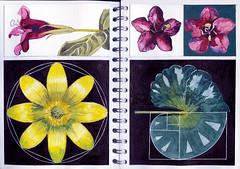 Red Flowers (Martin Blunt) Tags: ratio celandine redflowerssketchbookpainting ideassacred geometrygolden