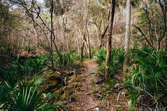 Aucilla Sinks Trail (corran105) Tags: wild nature rock forest landscape woods florida outdoor hiking w rocky trail limestone geology wilderness naturalbeauty karst panhandle palmetto bigbend northflorida floridatrail aucilla vsco floridanationalscenictrail aucillawma aucillasinks