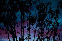 Human Soul #47 (TrojanHorsePictures) Tags: winter nature colors sunrise hike soul