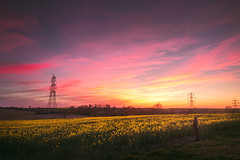 20/04/2016 Sunset Self-Portrait (Adam_Marshall) Tags: pink flowers sunset portrait sky adam field yellow clouds self canon walking landscape outdoors countryside spring pretty purple hiking exploring sigma marshall adventure powerlines cambridgeshire atmospheric goldenhour rapeseed vast oilseed adammarshall 1750mmf28 stereocolours eos70d