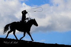 Riding the skyline DSC_5482.jpg (skiusa1) Tags: blue sky horse silhouette skyline cowboy ropeing
