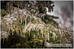 MARCH 2016  NM1_8472_011275-2 (Nick and Karen Munroe) Tags: trees winter ice rain weather fog fence nikon icestorm wintertrees icecrystals winterstorm nickandkaren karenandnick weatherevent munroephotography nikon2470f28 nikond7000 munroedesignsphotography munroedesigns karenick karenick23 nickmunroe nikond750 nickandkarenmunroe karenandnickmunroe karenmunroe