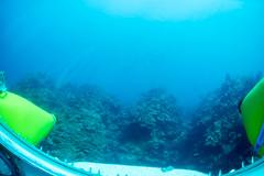 Shallow reef (ianc7777) Tags: leica sony submarine stanley karl roatan exploration institue deepsea idabel trielmar a7rii