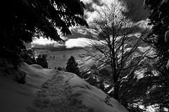 Snow way (Simon Buchou) Tags: light snow france ice rock stone montagne rando climbing summit neige foret arbre moutain glace alpinisme pyrnes escalade avalanche ambiance randonne gavarnie sommet