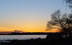 An evening at lauttasaari (Antti Tassberg) Tags: sunset sea sun tree silhouette finland lens landscape prime spring helsinki sundown 100mm puu lauttasaari auringonlasku aurinko uusimaa kevt laru