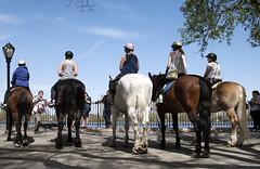 Horses by Reservoir I (Joe Josephs: 2,650,890 views - thank you) Tags: nyc newyorkcity travel horses horse animals centralpark manhattan streetphotography photojournalism centralparknewyork urbanlandscapes travelphotography urbanparks urbannewyorkcity joejosephs joejosephsphotography