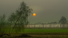 The desire to touch (piotrekfil) Tags: sunset sun mist tree nature field fog wow landscape pentax poland piotrfil