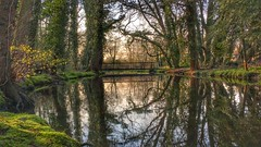 Adopt the pace of nature,her secret is patience. (mabumarion) Tags: bridge trees green nature lines reflections river spring moments riverside time outdoor observe kingfisher nette
