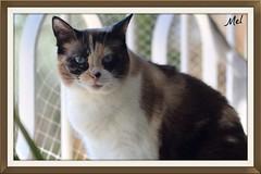 Villefranche sur Mer sur la terrasse Tara (Melody Rubeli) Tags: snow animal cat shoes chat villefranchesurmer