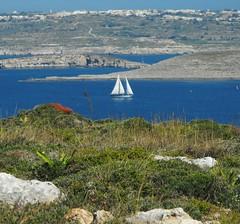 A Random memory. .. Mediterranean  Sea Islands Sailing Ship Malta Gozo Seascape Springtime Landscape Primavera     Wildflowers (Almena14) Tags: sea seascape primavera landscape islands mediterranean random malta wildflowers springtime sailingship gozo