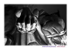 El amigo de Brcenas (Chema Concellon) Tags: blackandwhite espaa detalle blancoynegro easter spain europa europe dof hand arte valladolid escultura desenfoque mano bolsa turismo judas cultura fotgrafo viernessanto semanasanta 2012 tradicin castilla fotografa talla escultor procesin hollyweek monedas castillaylen figura apstol religin traicin traidor devocin cofrada imgen imaginera sagradacena chemaconcelln procesingeneral judasiscariote maderapolicromada imaginero grupoescultrico brcenas desenfoqueselectivo valladolidcofrade denarios procesingeneraldelasagradapasindelredentor juangurayaurrtia