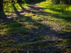 roots_in_twilight (Joerg Esper) Tags: trees shadow tree nature pen de deutschland natur roots olympus root bume schatten baum wurzel rheinlandpfalz wurzeln kretz olympuspenepl6 olympusmzuikodigitaled1442mm13556ezpancake