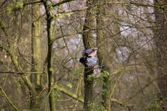 Spring in Rotterdam (Wessel...) Tags: netherlands canon spring rotterdam nederland vogels lente kralingen kralingseplas