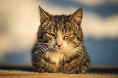 Super Cat Negotiates - Like A Boss =) (Exploring of Light) Tags: boss pet sign cat cool worship nap sleep awesome like super here well master human lazy feed manual now job meet negotiation demand slave role classy helios 442 conditions agreement terms supremacy