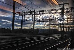 desde el AVE (xania.g) Tags: sun train tren atardecer sundown railway ave railwayline crepsculo ferrocarril sortintdemadrid