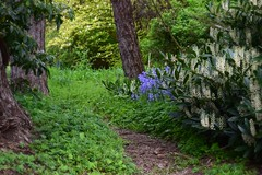 (careth@2012) Tags: nature landscape spring scenery view path scenic