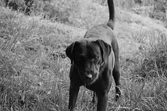 Alto / Stop (Tato Avila) Tags: dog animal monocromo colombia perro vida blanconegro cundinamarca