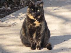 Goodbye, Chelsea (Hazboy) Tags: kat feline chelsea gato stray katze gatto pussycat kot piscataway hazboy hazboy1