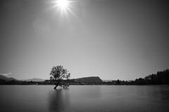 DSC07197-2 (jasonclarkphotography) Tags: newzealand sony wanaka canterburynz a6000 nex5 jasonclarkphotography