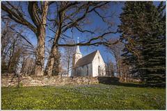 20160429. Mrjamaa kirik. 1361. (Tiina Gill (busy)) Tags: old morning blue building tree church spring oak estonia outdoor fir lutheran scilla mrjamaa