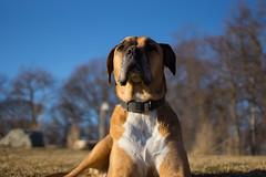 Bigger Than The Trees (Out of Ireland Photography ) Tags: dog stonybrook lola canine longisland avalon dublinheadyahoocom sonya65 outofirelandphotography