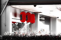 Lanterns (Occasionally Focused) Tags: street red blackandwhite bw pentax takumar lanterns manualfocus selectivecolour sunny16 manuallens manualexposure tonality unmetered justpentax takumarbayonet takumarbayonet135mm125 singleinapril2016
