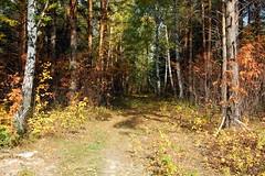 DSC_6010 (Rustam Bikbov) Tags: autumn september 2012    sverdlovskoblast