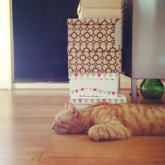 on guard... protecting the gift boxes  #gingercat #sleepingcat #gingertabby (fede shop) Tags: square squareformat rise iphoneography instagramapp uploaded:by=instagram