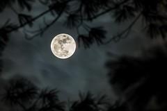 Wolf Moon (Ryan Jeske) Tags: sky moon pinetree haze sillouette wolfmoon sigma150500 canon70d