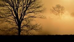 Morning mist ,the sleeping world ,silent and gold (Marie.L.Manzor) Tags: trees sky mist fog backlight forest sunrise landscape nikon mood nikkor goldenglow marielmanzor nikon610