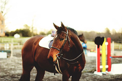 (suzcphotography) Tags: sunset horse canon 50mm riding pony jumper hunter tad coffin equestrian saddle thoroughbred equine lessons t3i gelding