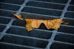 A Grate Leaf 1