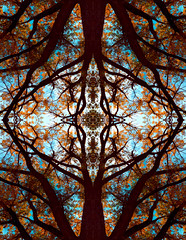 Design Through Nature (mikejohn103) Tags: abstract tree love nature surreal atumn