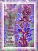 Hören&befolgen / hear and obey (Martin Volpert) Tags: flower fleur jesus flor pflanze blomma christianity blume fiore blüte blomster virág christus lore bloem blóm çiçek floro kwiat flos ciuri plantaginaceae kvet kukka cvijet flouer glauben christentum bláth cvet zieds õis floare תנך blome žiedas bibelverskarte wegerichgewächse mavo43 veronicaaustriaca österreichischerehrenpreis lukasluke1128