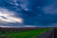 Stormy Morning (Jason Gapasin) Tags: california county winter storm vineyard san wine joaquin valley grapes stockton grapevine lodi