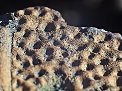 Brick (Oczyma Duszy) Tags: cactus macro brick film nature closeup doll natura textures bark makro cumin kora kaktus lalka tonner porschecarrera cegła extentiontubes tinykittycollier lauraceae kumin helios442 factures klisza faktury pierścieniepośrednie olympusepl5 liśćlaurowy fotografiazbliżeniowa