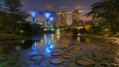 Hidden City (Mabmy) Tags: buildings garden lights singapore lotus sony bluehour scape 16mm mbs gbtb supertree manualblending a7rii a7r2