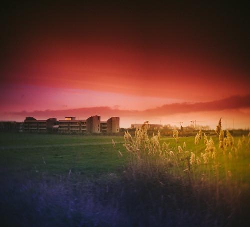 raimbow field