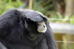 _DSC9394 (alfaluis) Tags: animal zoo pato jardim macaco tigre urso zoologico