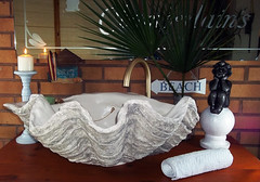 Grey Giant Clam Shell SINK 17 (LittleGems AR) Tags: ocean sea sculpture sun beach home statue giant bathroom shower aquarium soap sand bath sink natural contemporary unique decorative shell craft style toilet towel clam basin special shampoo taps wash ornament gift seashell pearl nautical reef decor spa luxury opulent fossils oneoff clamshell mollusks cloakroom bespoke tridacna sculpt crafted gigas facetowel