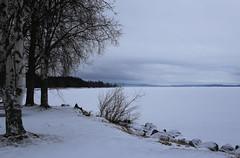 Snowy lake (in Explore) (fotofredrica) Tags: trees winter cloud lake snow tree nature outdoor explore serene dellen inexplore