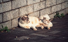 Sleepy Cats (Jon-F, themachine) Tags: city sleeping urban cats japan cat asian asia cityscape sleep cities cityscapes kitty olympus nagoya kitties stray  nippon japo oriental dslr orient  minatoku fareast  aichi pussycat nihon omd puddytat strays   chubu kittycat japn   pussycats 2015  m43  mft  minatoward landoftherisingsun mirrorless  chuubu   micro43 microfourthirds  ft xapn jonfu  mirrorlesscamera snapseed   em5ii em5markii sorrynotquitesquareenoughforthesquareformatgroup