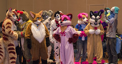 DSC_2372 (Acrufox) Tags: midwest furfest 2014 furry convention december hyatt regency ohare rosemont chicago illinois acrufox fursuit fursuiting mff2014