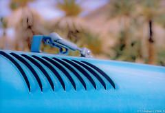 Capot de 4x4 dans le dsert / Four wheels drive hood - Algrie (christian_lemale) Tags: sahara desert 4x4 palmtrees hood algrie capot palmiers dsert