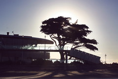 (felix.h) Tags: newzealand christchurch summer tree silhouette backlight canon eos evening sundown canterbury backlighting newbrighton 400d canoneos400d digitalrebelxti eoskissdigitalx tokina5013528 tokina50135mm28