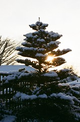 Light Snow (bigalid) Tags: winter sun snow film 35mm nikon january nikkor dumfries 2016 c41 f55 afd 3580mm afnikkor lomography400cn
