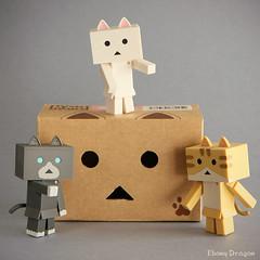 Cardboard Cats (Ebony Dragon) Tags: cat cardboard yotsuba nyanboard